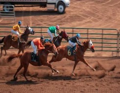 المغرب الرياضي  - إنتاج مربط دبي للخيول العربية ينتزع الذهب في بطولة بيرغامو الدولية