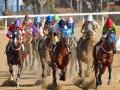 المغرب الرياضي  - الفارس المصري نايل نصاريلي دعم من بيل غيتس في أولمبياد طوكيو