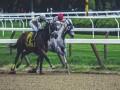 المغرب الرياضي  - تتويج 24 حصانا من أجود الخيول المغربية في نهاية الملتقى الوطني للخيول العربية البربرية